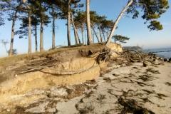 Lav klint med træer